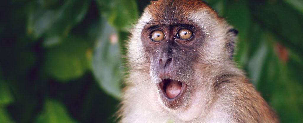 Monkey fNIRS